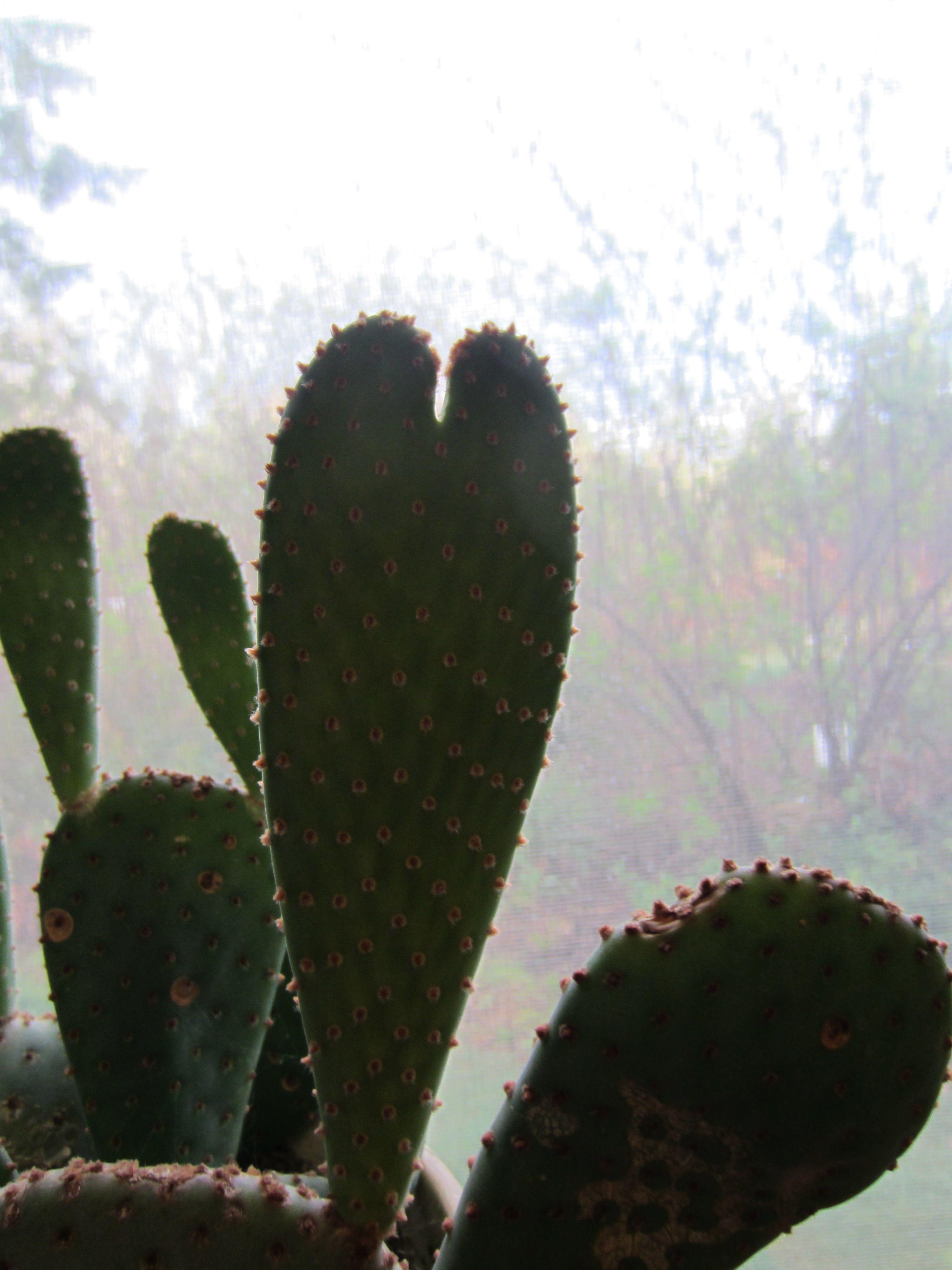 Arizona Cactus Heart  Photo By Mary Fox   Long Beach, WA #arizonacactus Arizona Cactus Heart  Photo By Mary Fox   Long Beach, WA #arizonacactus Arizona Cactus Heart  Photo By Mary Fox   Long Beach, WA #arizonacactus Arizona Cactus Heart  Photo By Mary Fox   Long Beach, WA #arizonacactus Arizona Cactus Heart  Photo By Mary Fox   Long Beach, WA #arizonacactus Arizona Cactus Heart  Photo By Mary Fox   Long Beach, WA #arizonacactus Arizona Cactus Heart  Photo By Mary Fox   Long Beach, WA #arizonacac #arizonacactus