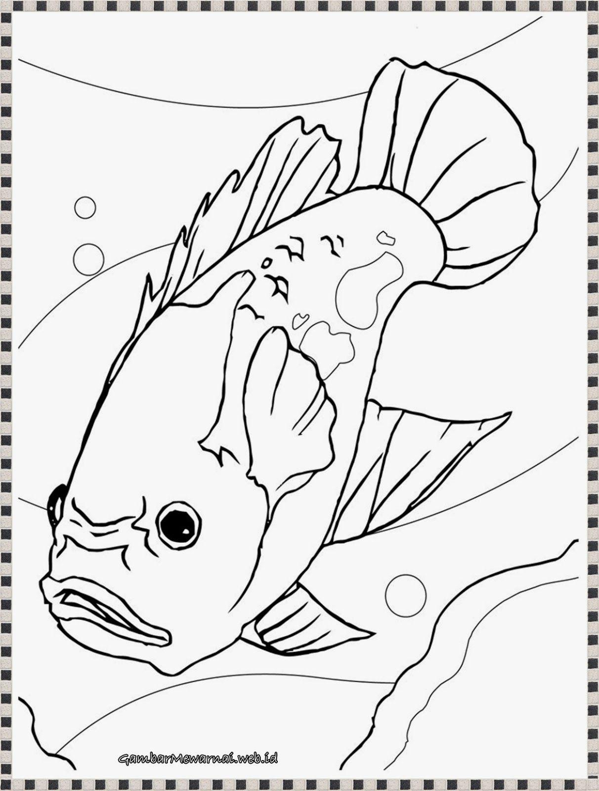 gambar mewarnai ikan oscar di akuarium