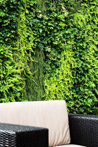 #zhaofoto #verdevertical #photography #green #plants
