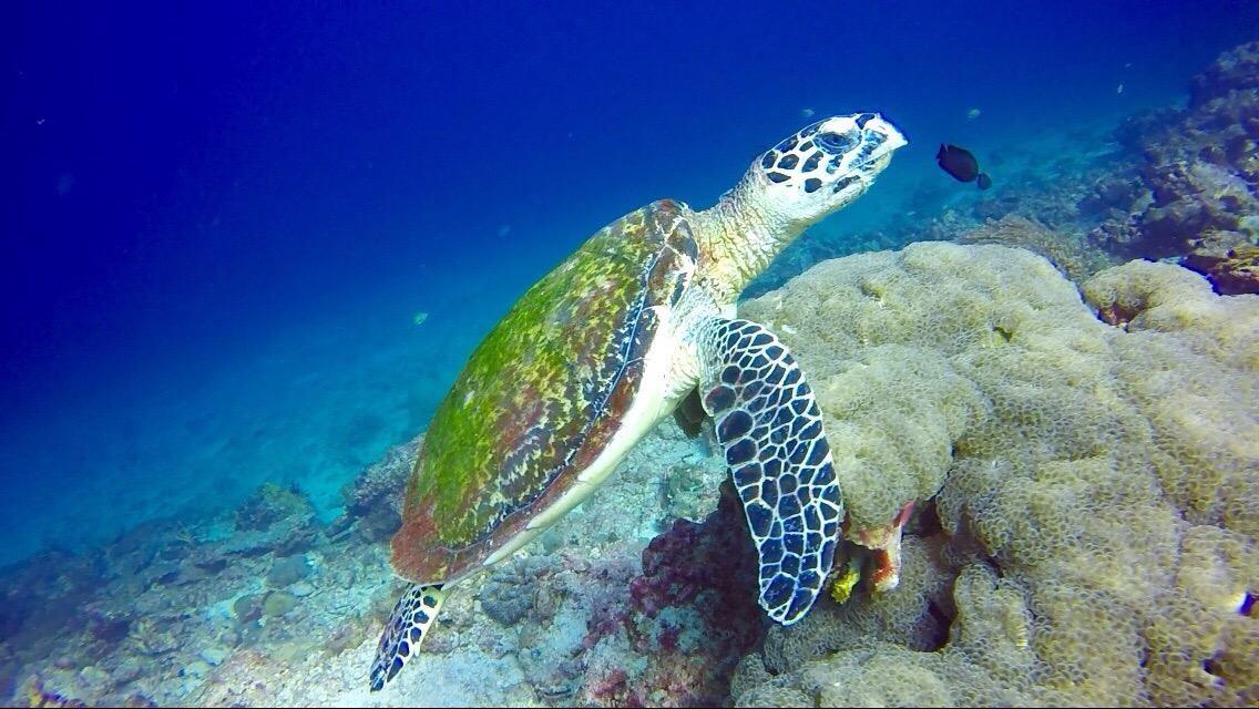 Lanta Diver Ko Lanta, Thailand