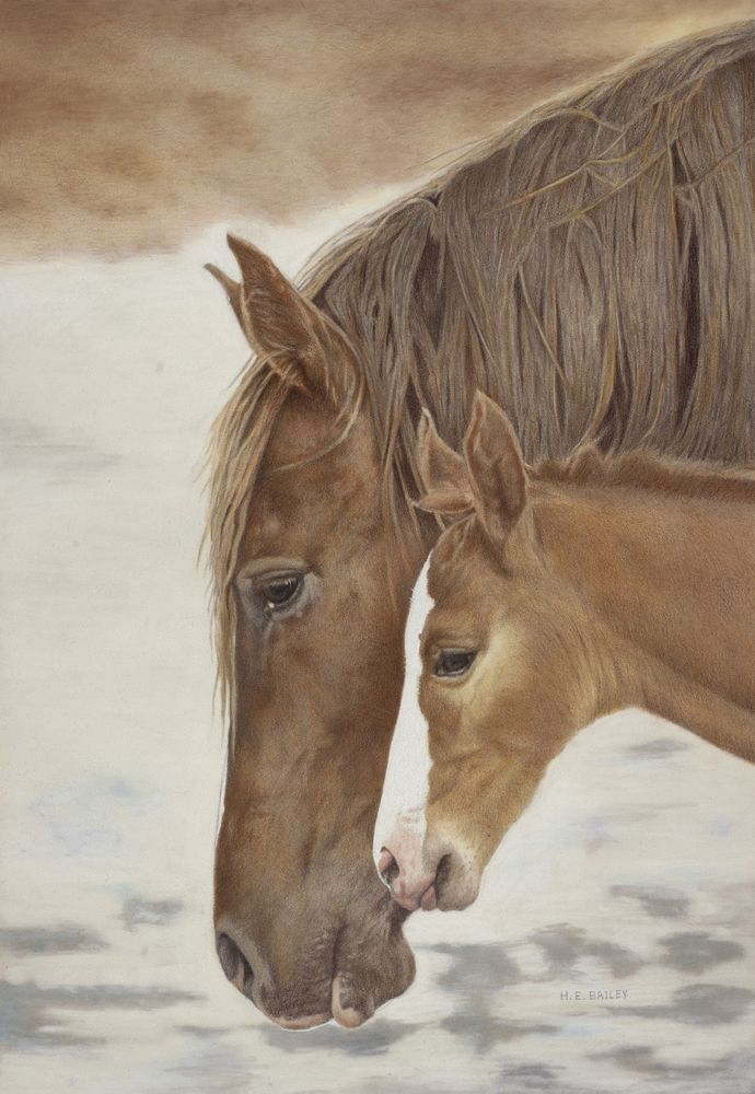 Equines   Helen Bailey Fine Art- Medium- Colored Pencil. Amazing Artist!