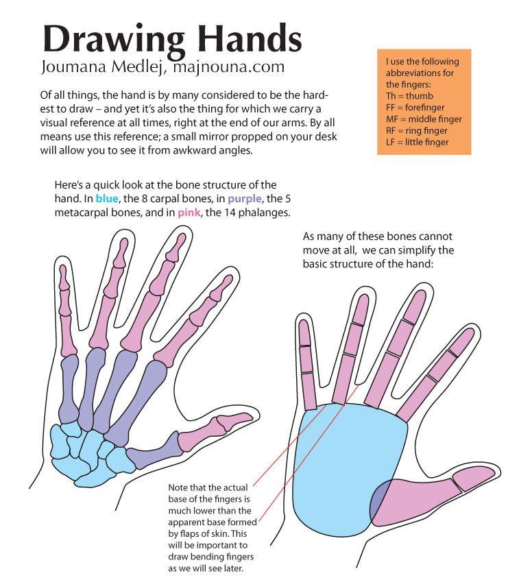 tumblr_mio5f7Gp7l1s1qlqio1_1280.jpg (741×846)   Human Anatomy: Hands ...