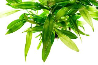 http://www.alternativemedsolutions.com/2012/11/top-10-herbs-that-can-lower-cholesterol.html