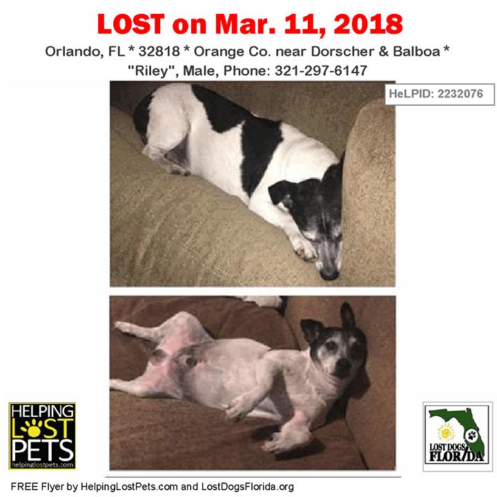Have you seen this lost dog? LOSTDOG Riley Orlando