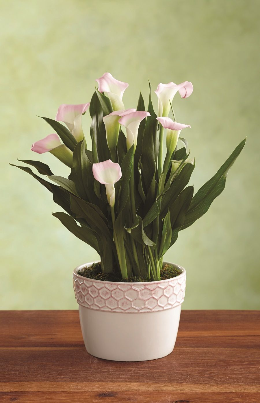 A Beautiful Calla Lily Plant For Mother S Day Make Her Smile Lily Plants Plants Mother S Day Gift Baskets