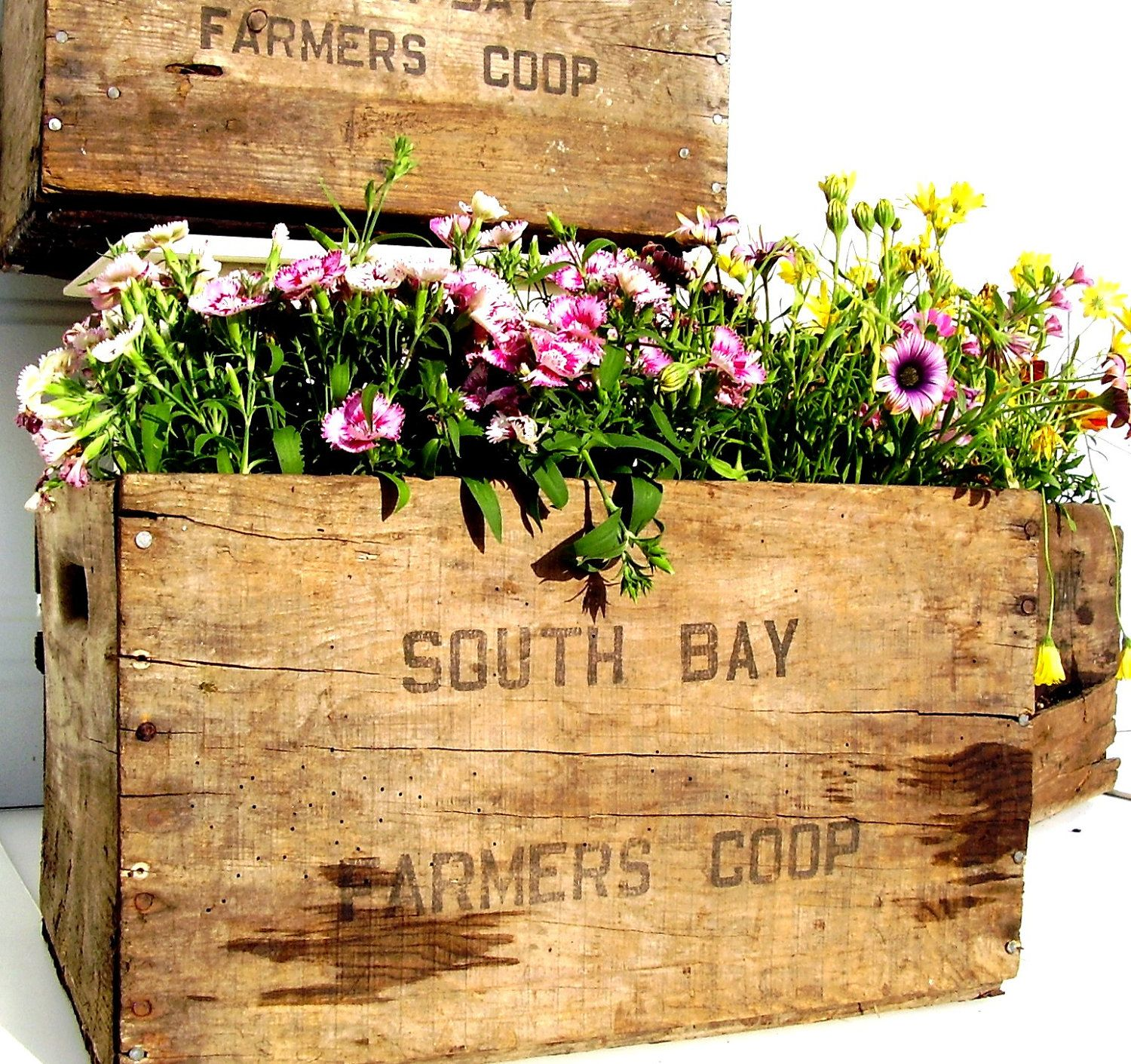 Vintage Rustic Wooden Crate Planters To Line The Aisle Saw Some Pre Made Ones At Osh Of All Places Wooden Crates Rustic Rustic Wood Box Vintage Wooden Crates