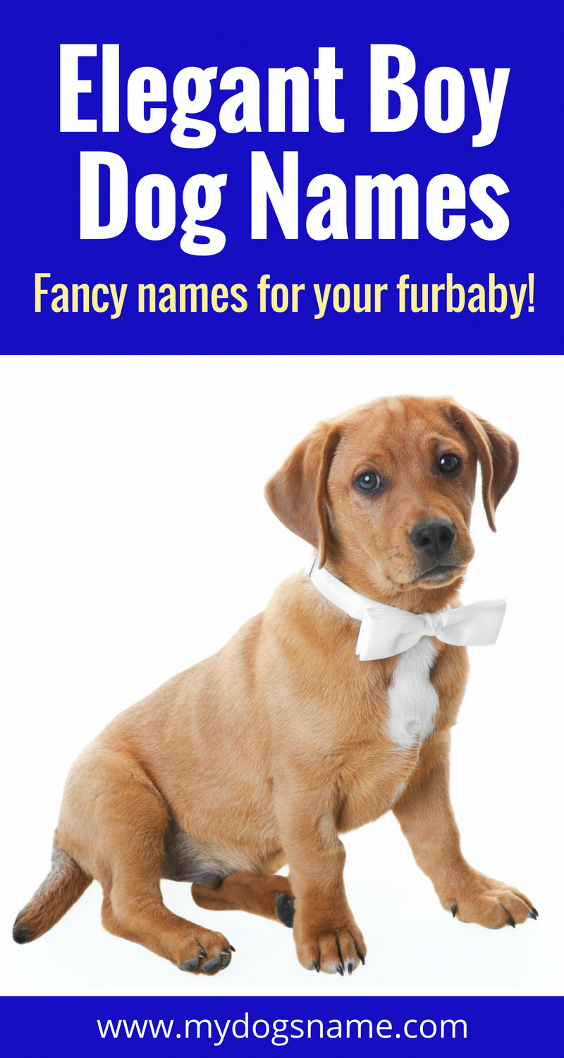 These Regal Dignified Dog Names Are Great Choices For Your New