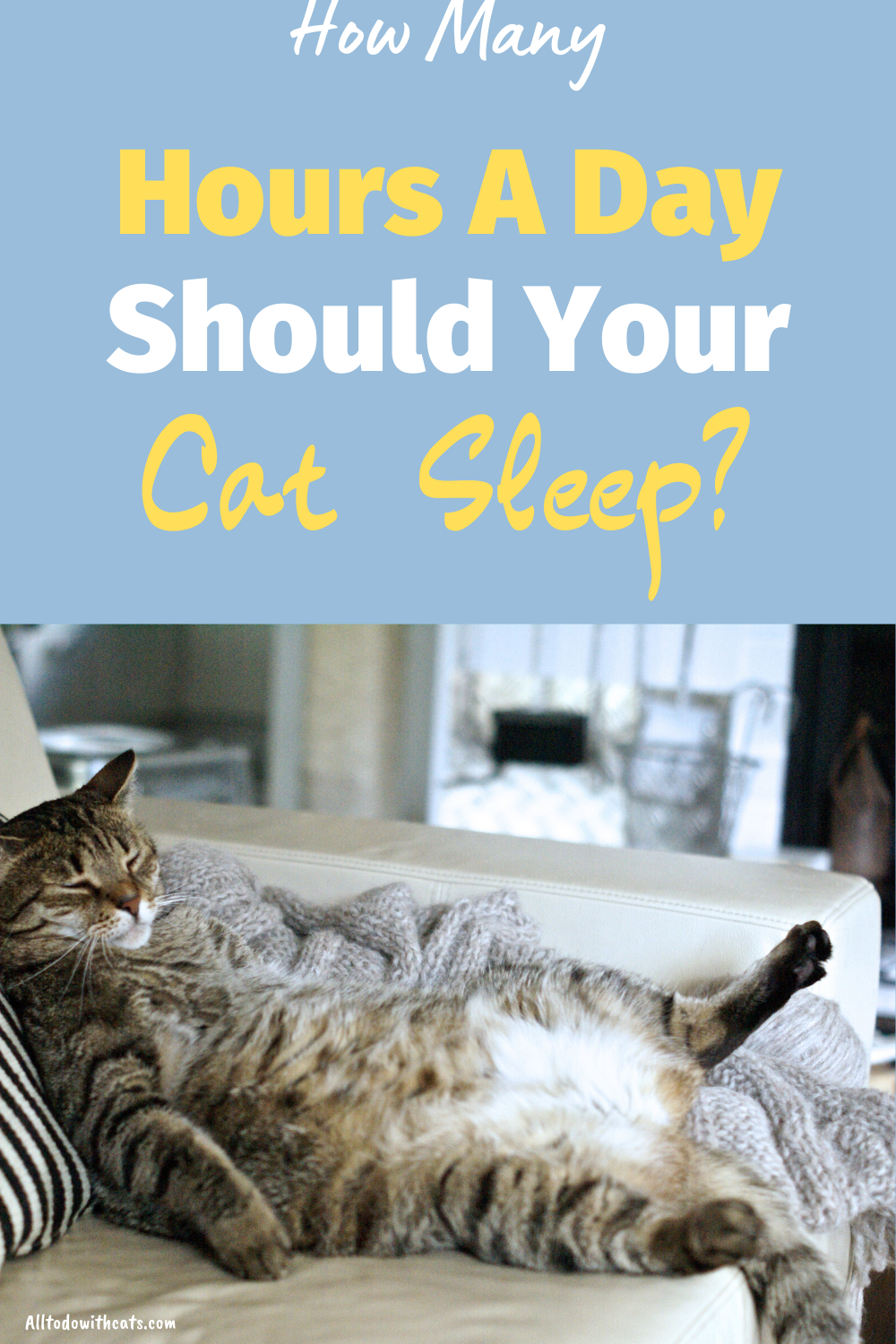 Why Do Cats Sleep So Much Discover Amazing Facts In 2020 Cat Sleeping Cat Care Tips Cat Behavior