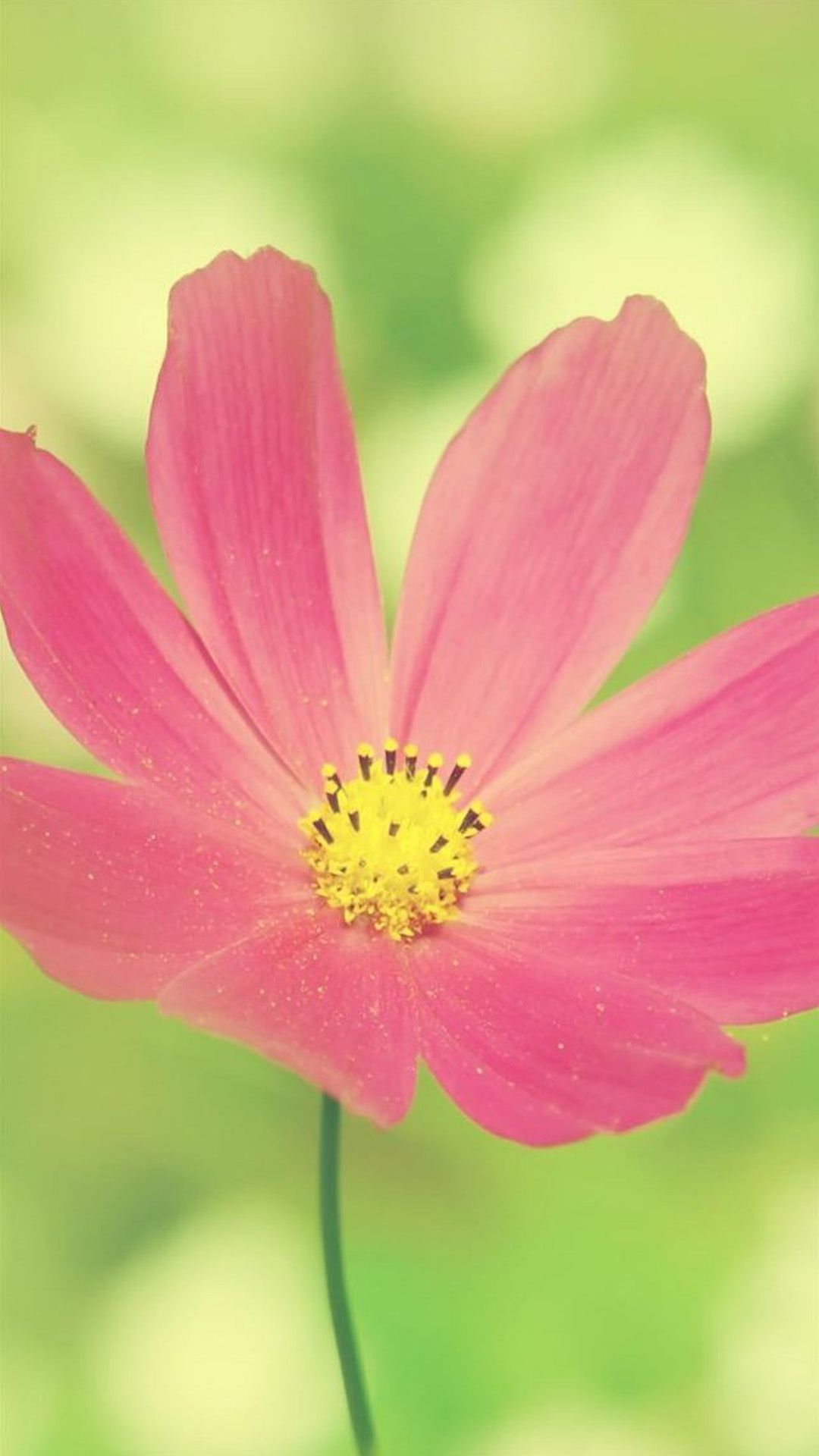 Flower Macro HD Wallpapers Pack Download FLGX DB