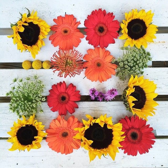 Anatomy Of Our Sunflower Mix Part 2 Sendhappy Photo By Tmkampa Order Flowers Online Online Flower Delivery Flowers Online