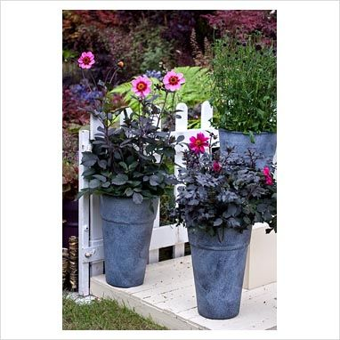 dahlias in pots love it garden planting dahlias. Black Bedroom Furniture Sets. Home Design Ideas