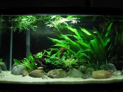Aquascape,How To Aquascape,Aquascape Equipment,Aquascape Fish