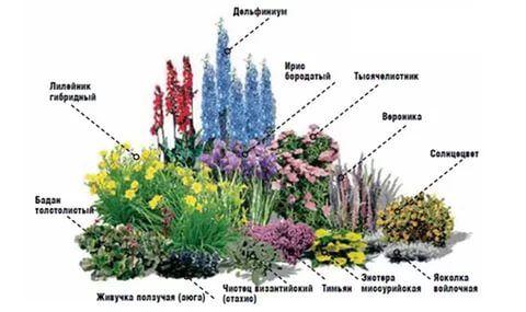 Цветы для клумбы непрерывного цветения из многолетников фото