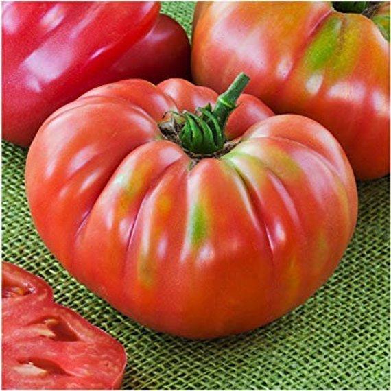 Heirloom NON GMO Tomato Mix Seed FRESH SEEDS Solanum lycopersicum Semilla Tomate