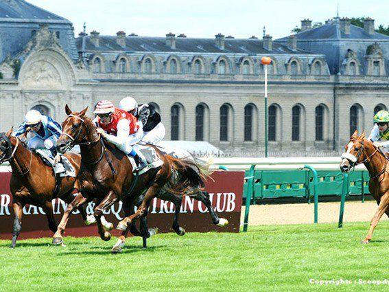 المهر دهام يفوز بكأس قطر فرنسا للخيل العربية الأصيلة Arabian Horse Horse Racing Horses
