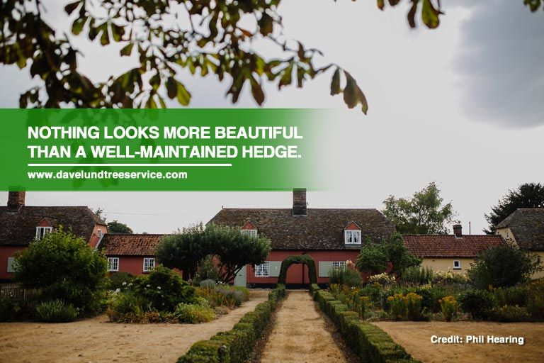 Pruning Tips Keeping Your Hedge in Perfect Shape Trimming your does not need to be difficult Follow these basic and keep your hedges perfectly shaped help you achieve pro...