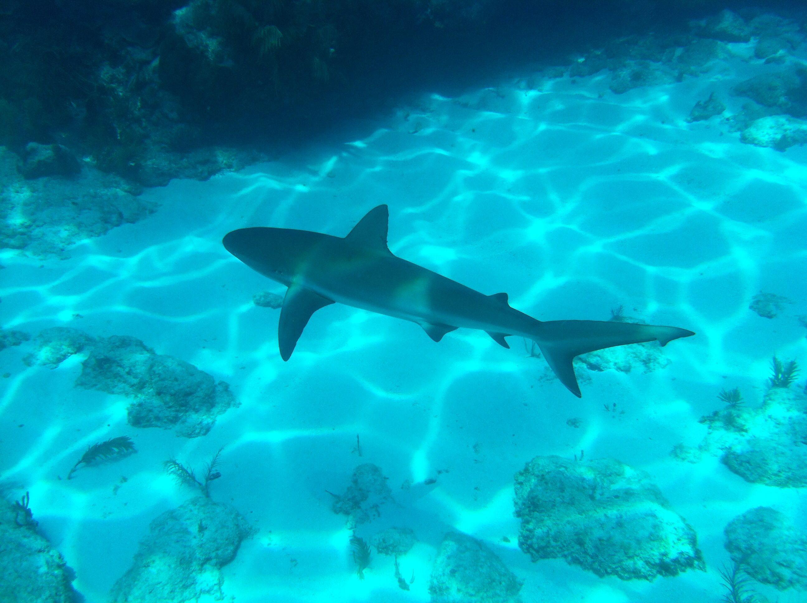Pin By Loren Elizabeth On Scuba Vacations Shark Florida Keys Adventure