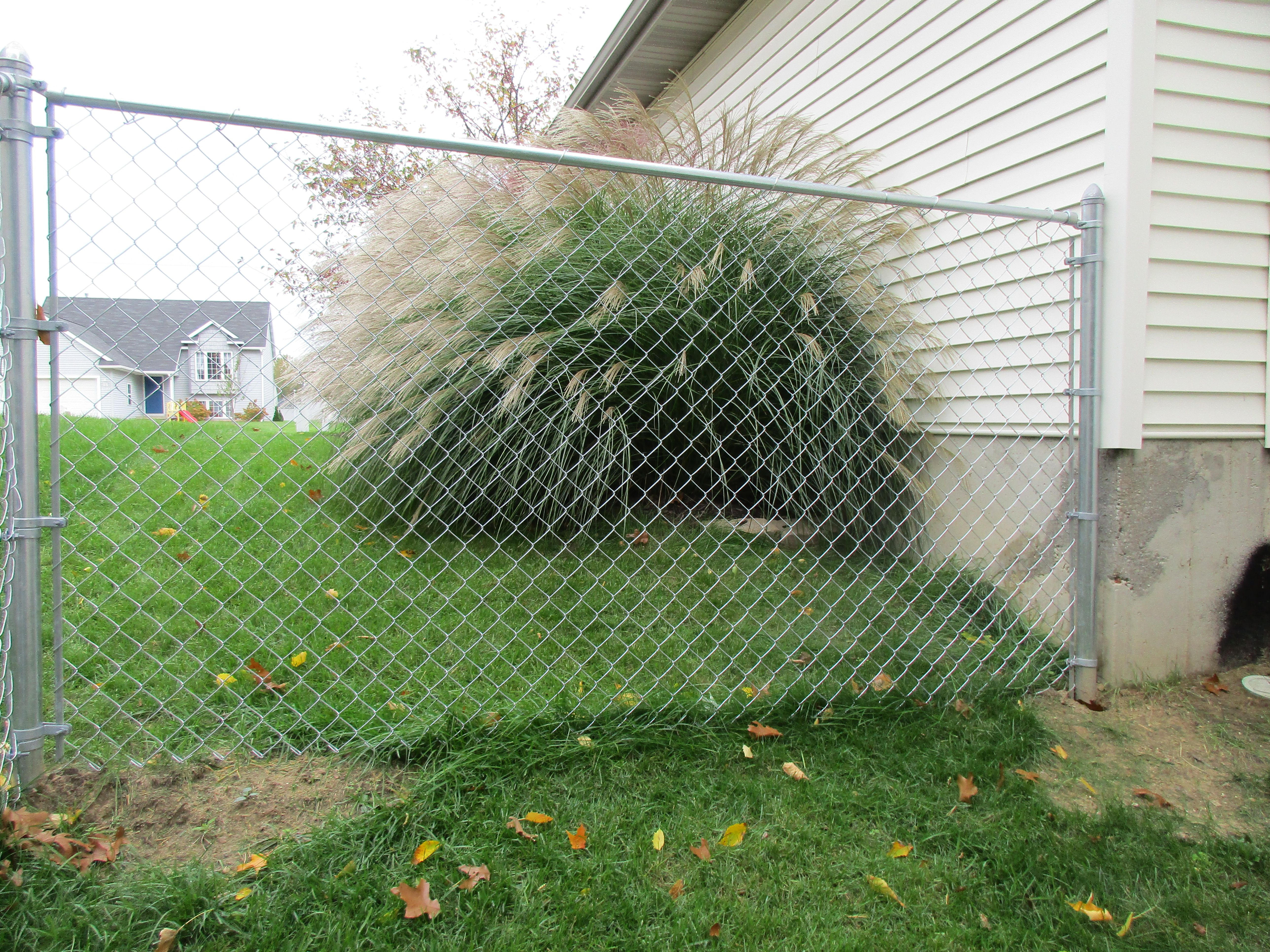 5 High Galvanized Chain Link Fence Chain Link Fence Fence Plants