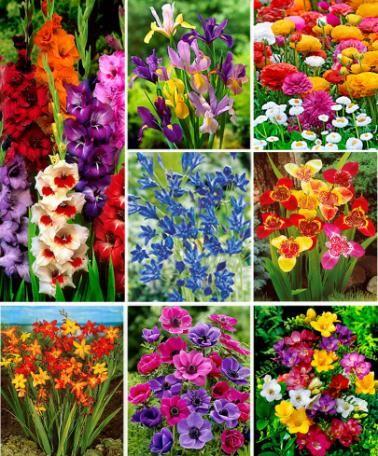 550 Bulbes à fleurs - Offre Exceptionnelle pour fleurir votre jardin  www.bakker.fr