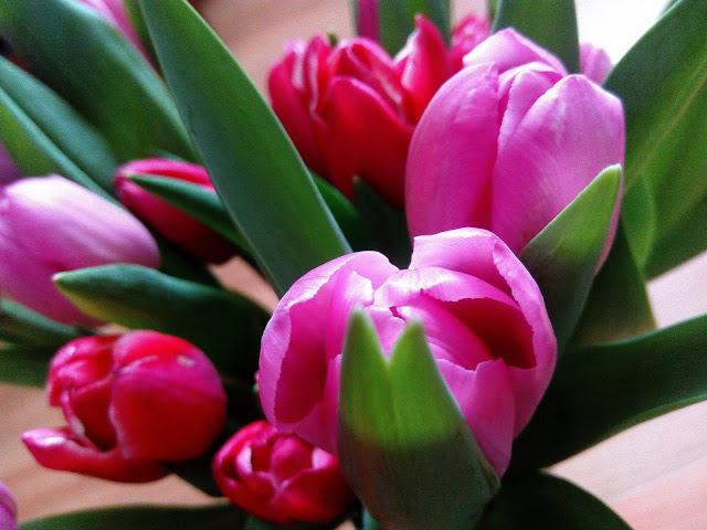 Eine Sammlung Von Bezaubernden Tulpenfotos Flower Photos Close Up Photography Tulips