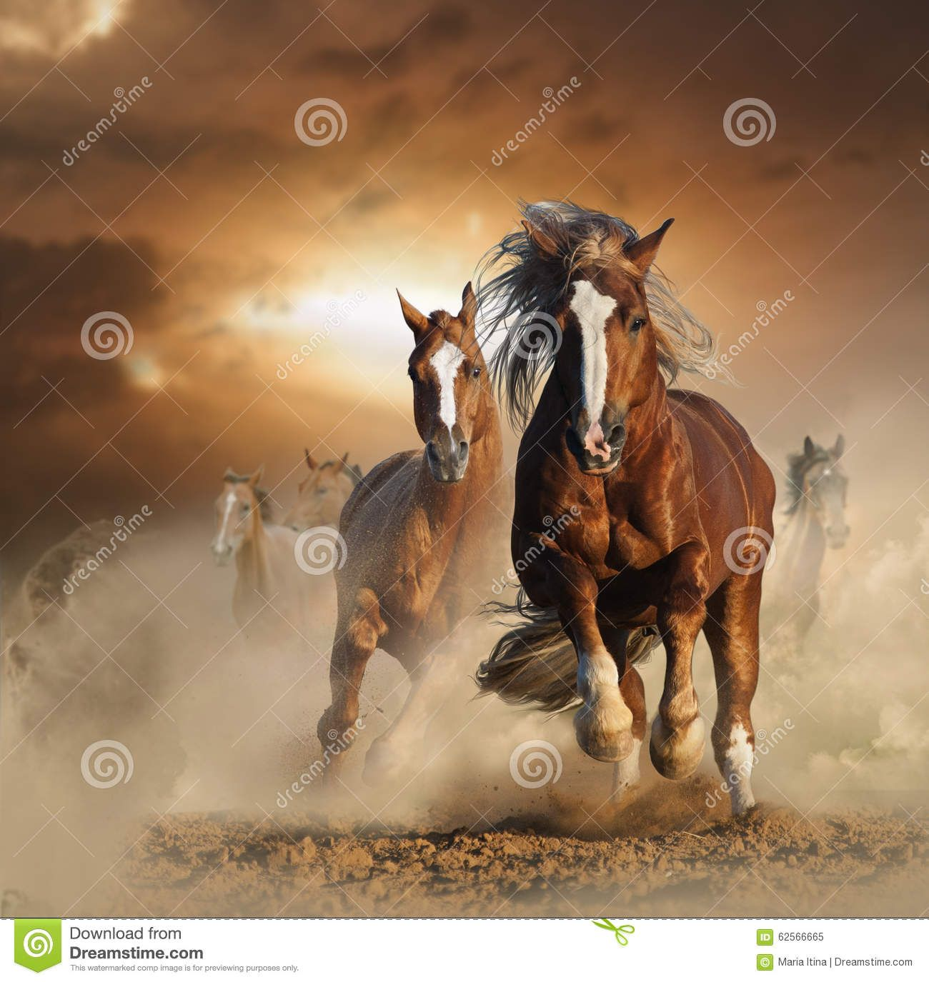 Two Wild Chestnut Horses Running Together In Dust Stock ... - photo#27