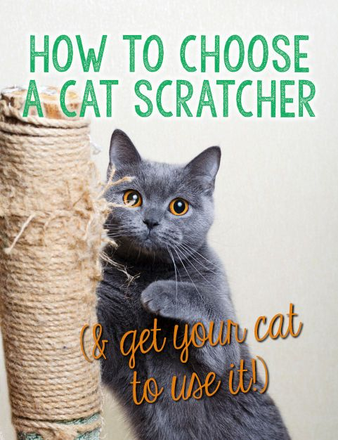 How To Choose A Cat Scratcher Amp Get Your Cat To Use It