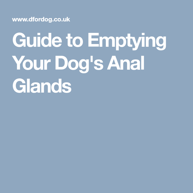Have anal gland emptying