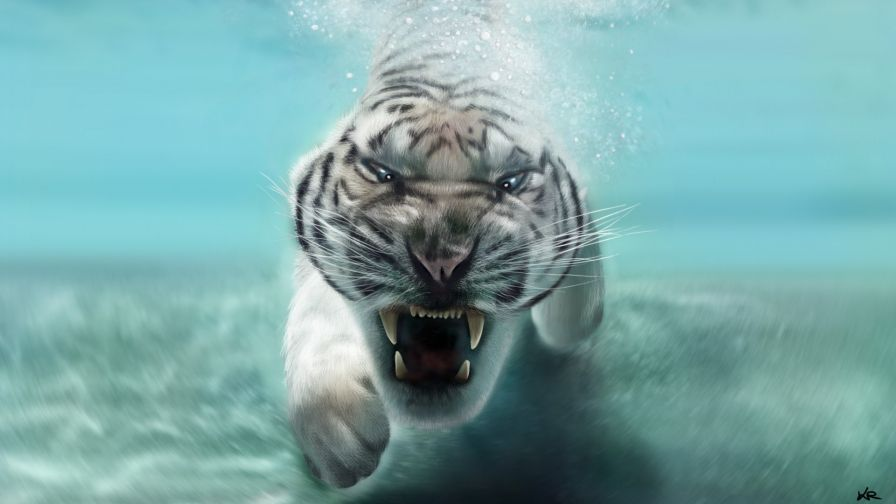 Wild Snow Leopard Attacks Target Wallpaper Free Hd Tiger In Water Tiger Images Target Wallpaper