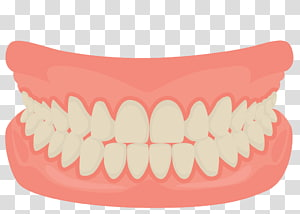 Teeth Illustration Human Tooth Smile Mouth Dentistry Cartoon Mouth Smiling Teeth Transparent Background Png Clip Teeth Illustration Human Teeth Tooth Cartoon