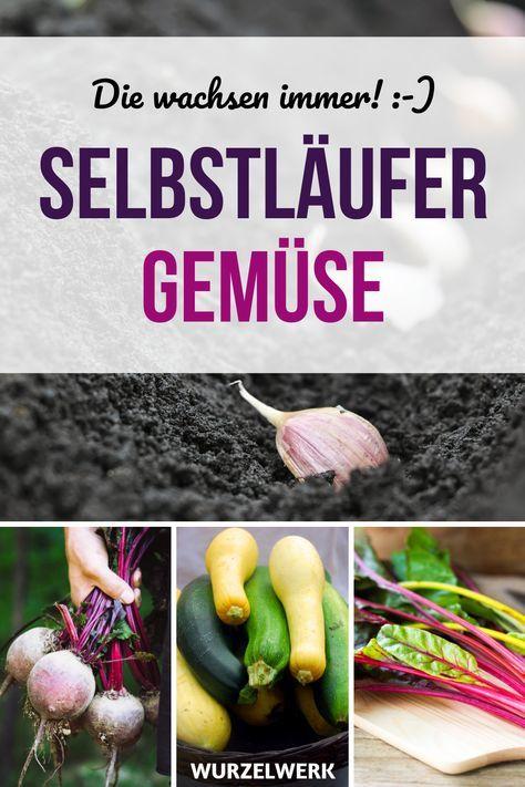 Gemüsegarten für Anfänger: 9 Gemüse, die jeder hinkriegt - Wurzelwerk