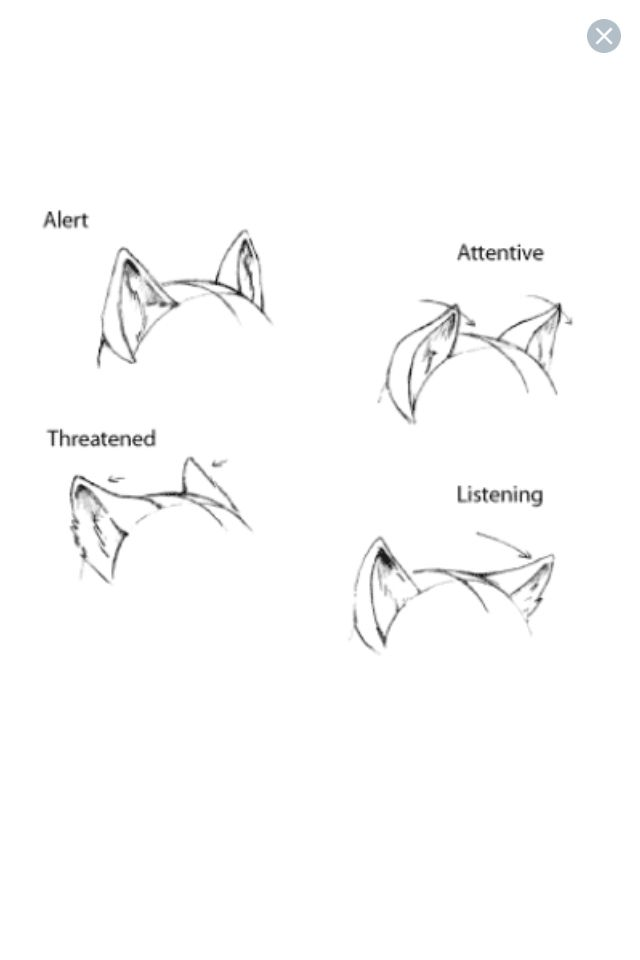 Ear Expressions Furry Anthro Tutorials Pinterest Drawings Art