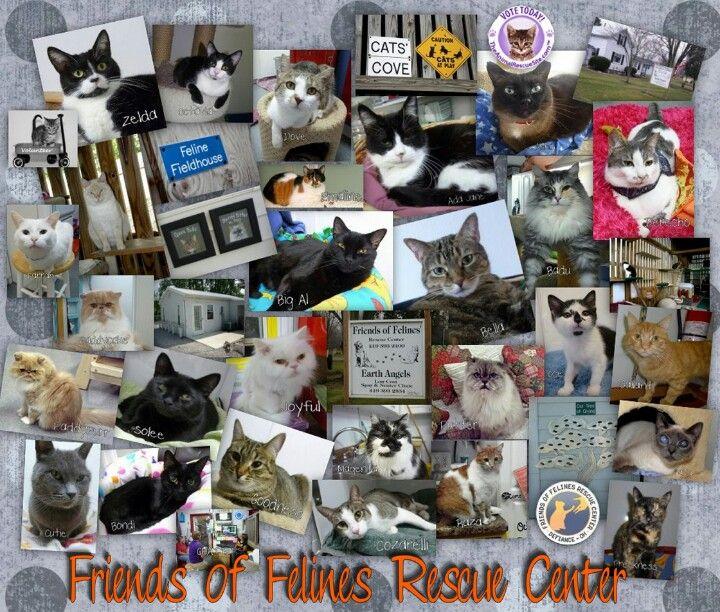 Friends Of Felines Rescue Center Defiance Ohio Feline Cat S Defiance Ohio