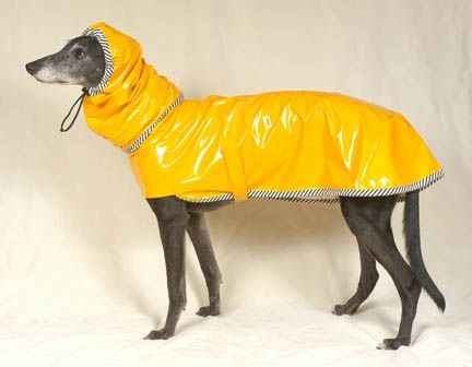 Possibly the cutest greyhound-specific raincoat I have come across ...