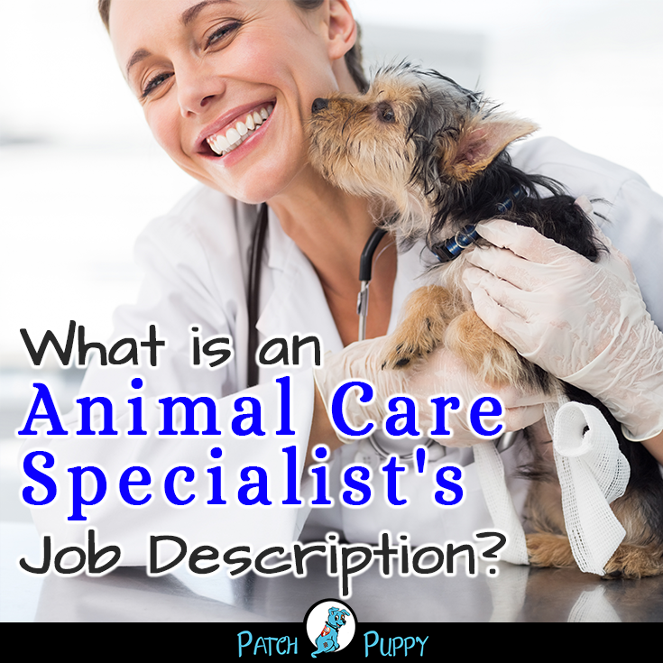 12 Part Time Jobs Working With Dogs And Other Animals Patchpuppy Com Jobs Working With Dogs Pet Care Jobs Pet Health