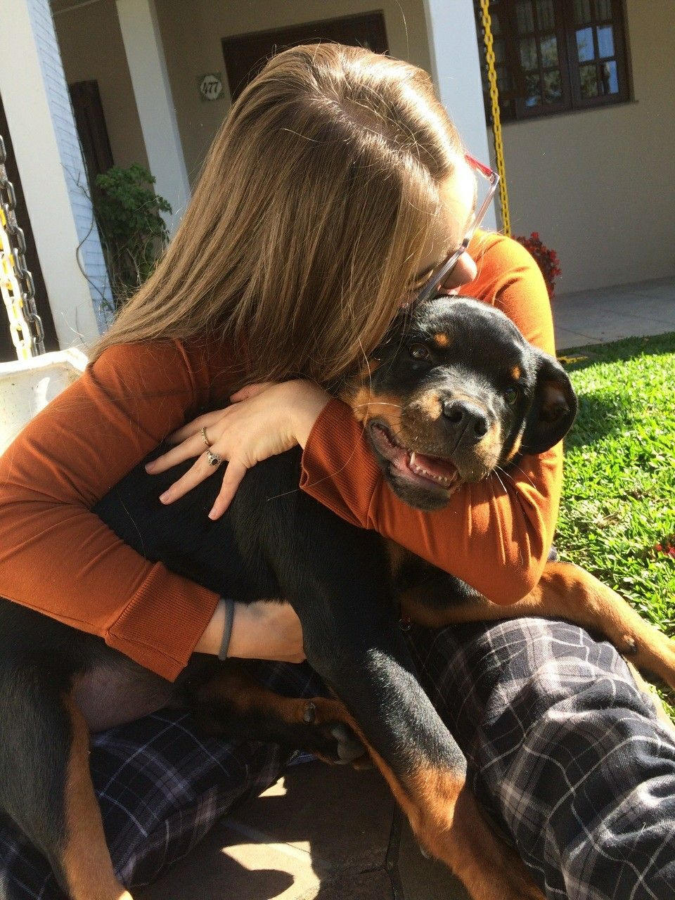 Rocko 🎉 - Large Male Rottweiler Dog in QLD - PetRescue