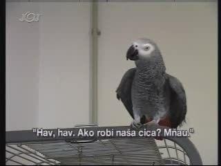 Slovenský Hovoriaci Papagáj – video na Free.sk