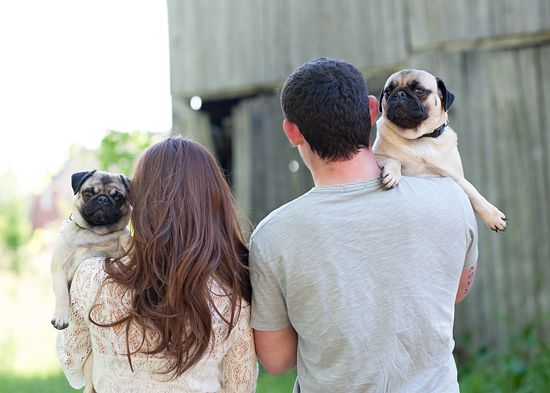 T J Engagement Part I Dog Photoshoot Doug The Pug Pugs