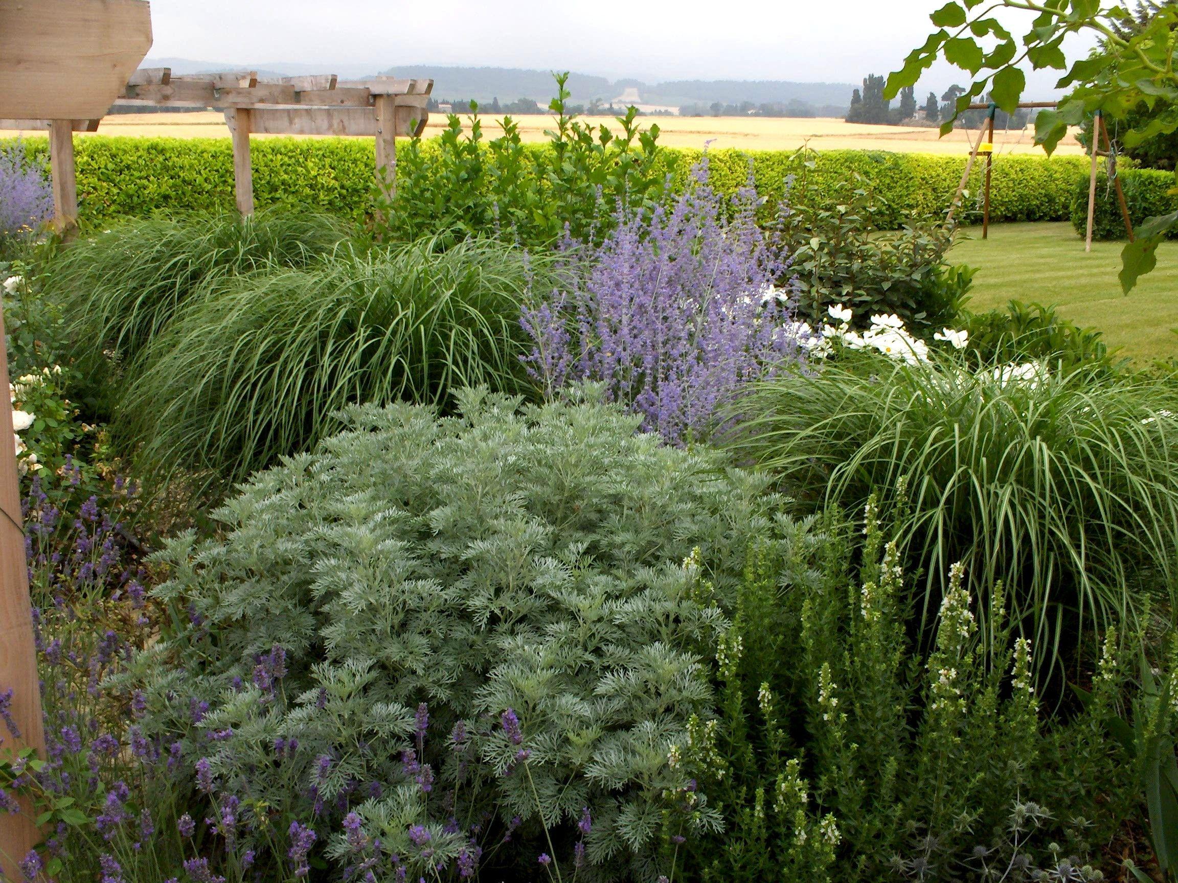 Buy blue dune lyme grass in nw arkansas - Castles