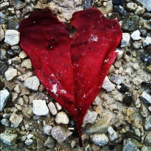Autumn love on the trailway // by Stephanie, Caledon East, ON