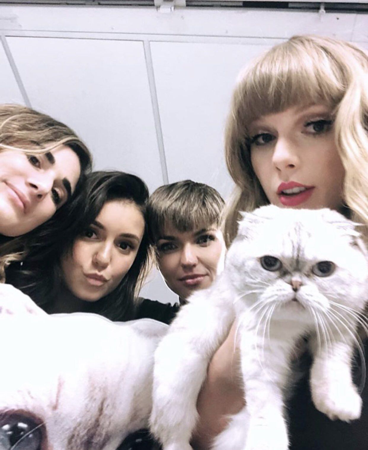 die taylor swifts cat - 639×858