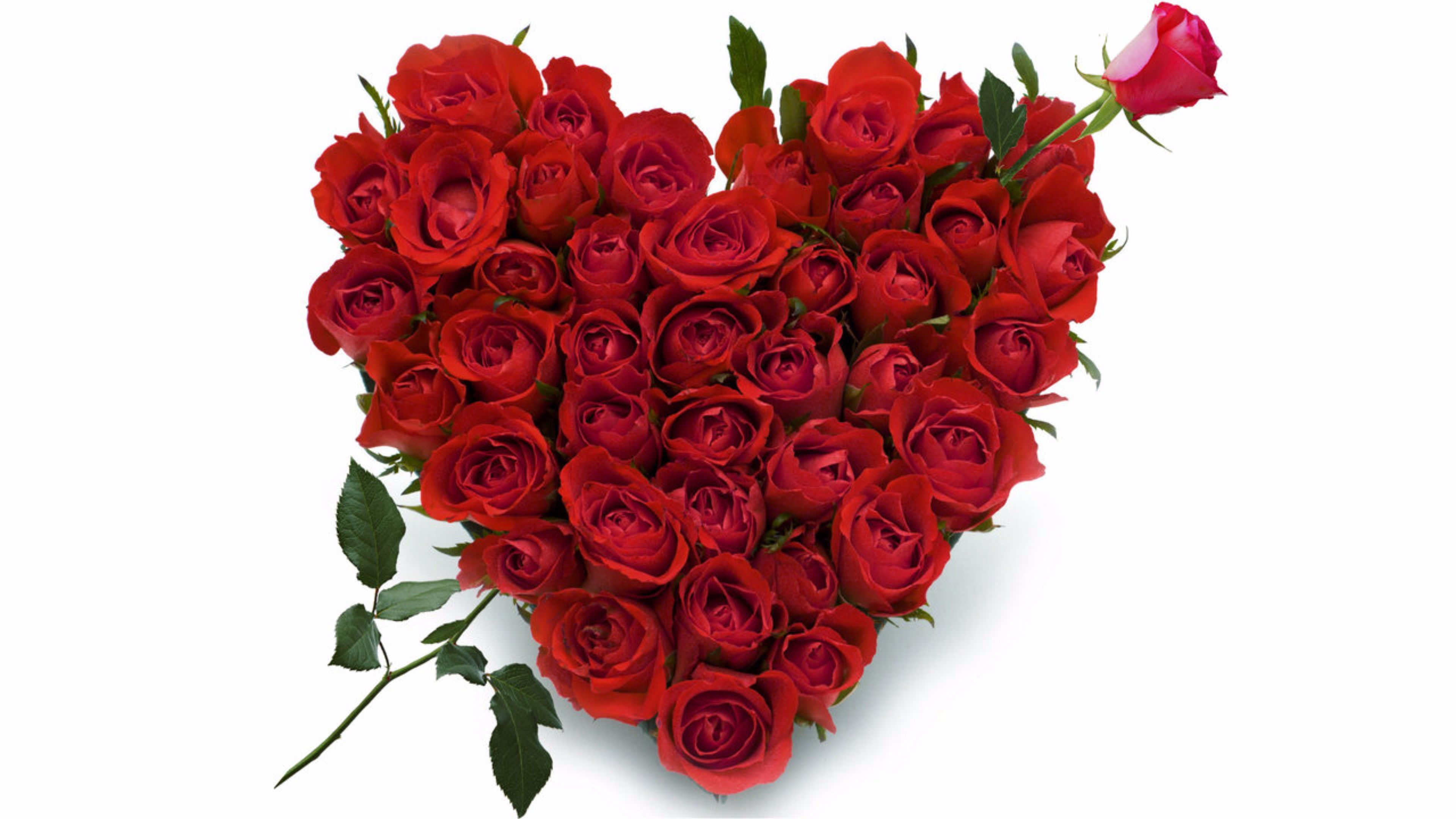 Pin by gift my emotions on online flowers delivery india pinterest visit izmirmasajfo