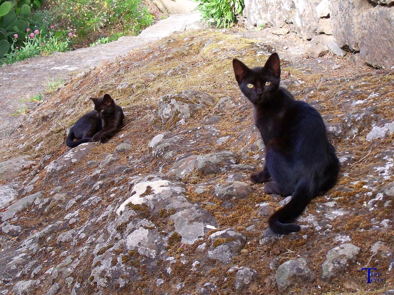Dos gatitos negros #Spain #CanaryIslands #GranCanaria #Teror