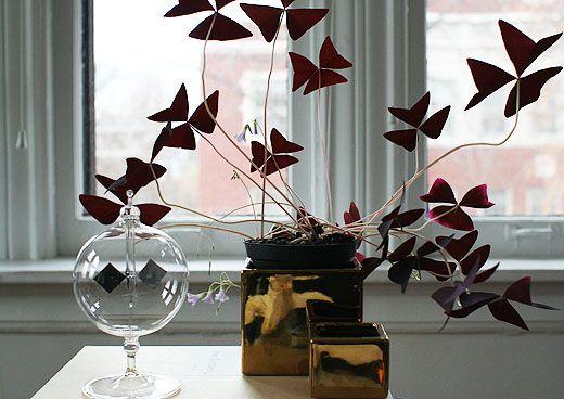 kleines leaves and butterflies wohnzimmer cool abbild und dbdecbafe