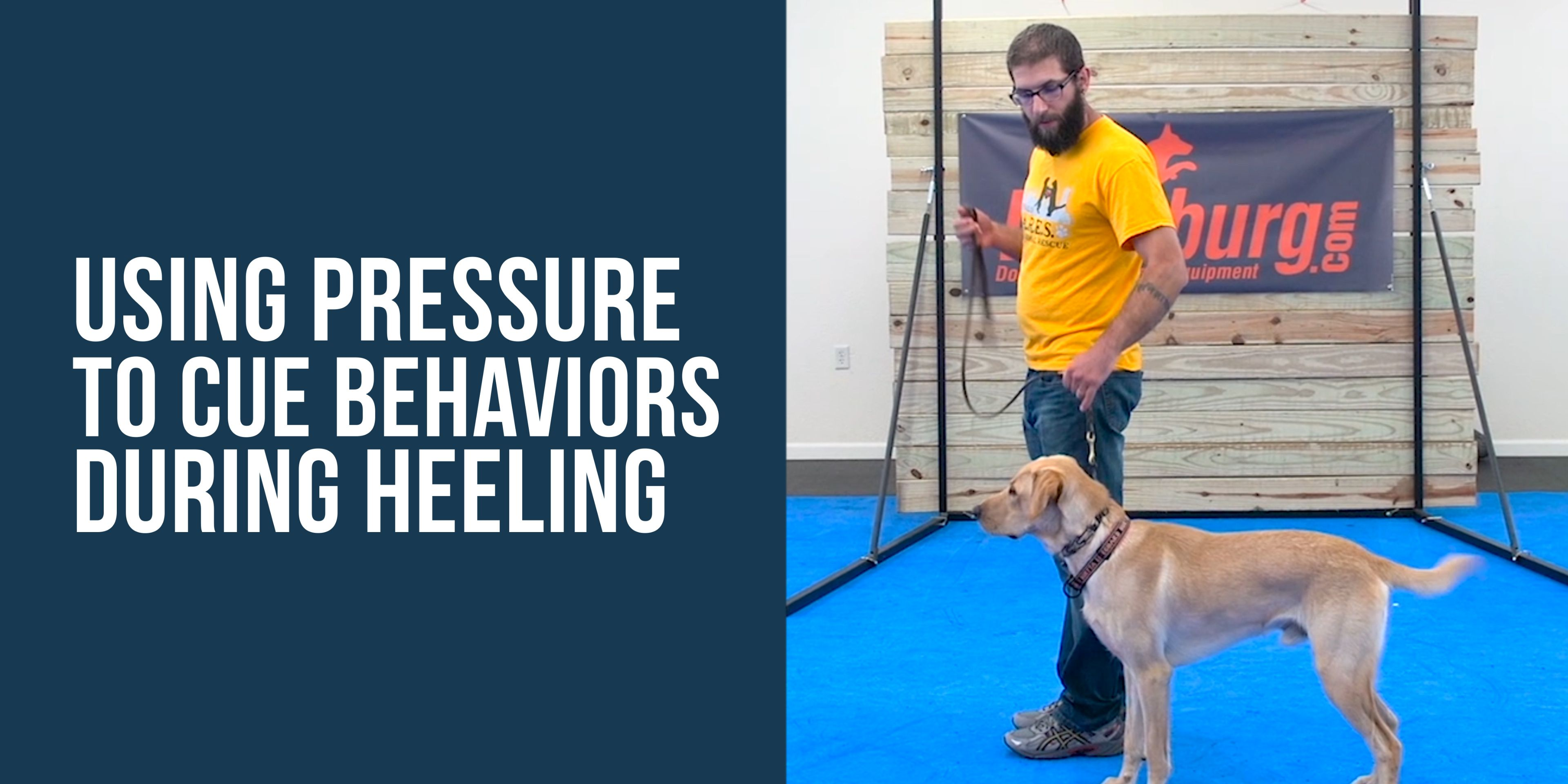 In This Clip You Might Notice That I M Using The Leash Pressure