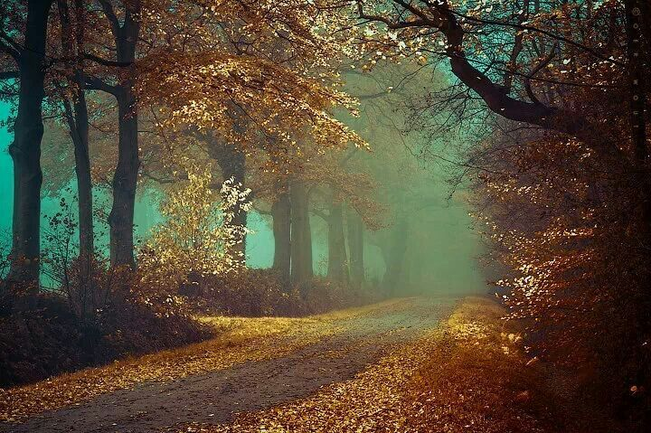 Would love to take a walk here