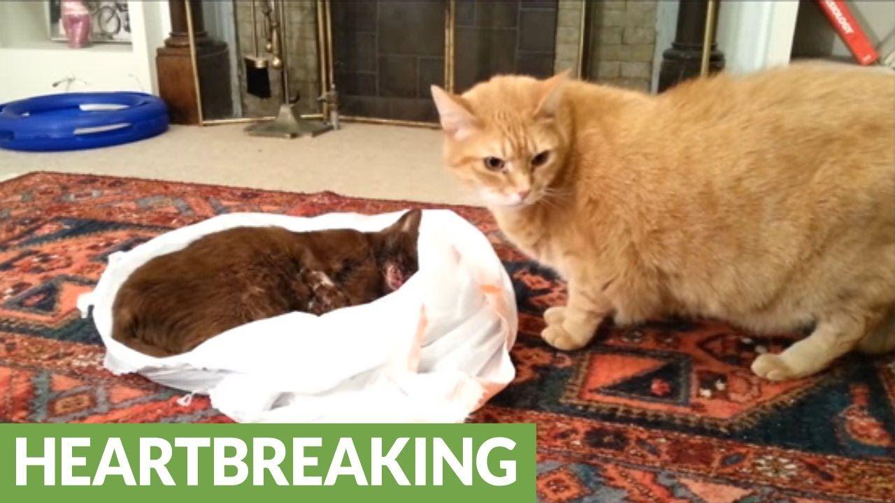 Cat Tries To Revive His Dead Friend
