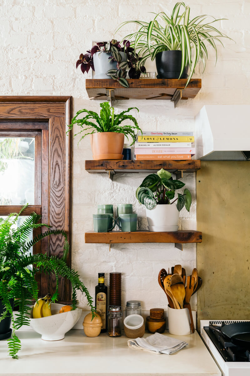 The Best Plants for Your Kitchen Bloomscape Indoor