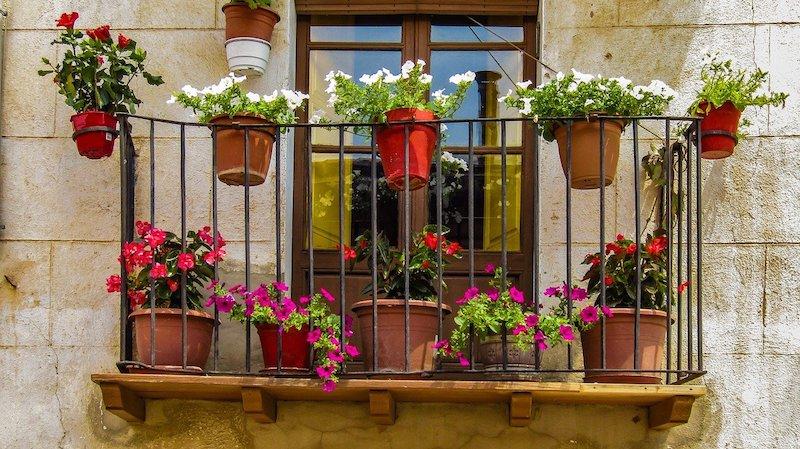 Kwiaty Na Balkon Jakie Rosliny Na Balkon Beda Najlepsze In 2020 Annual Plants Planting Vines Balcony Garden
