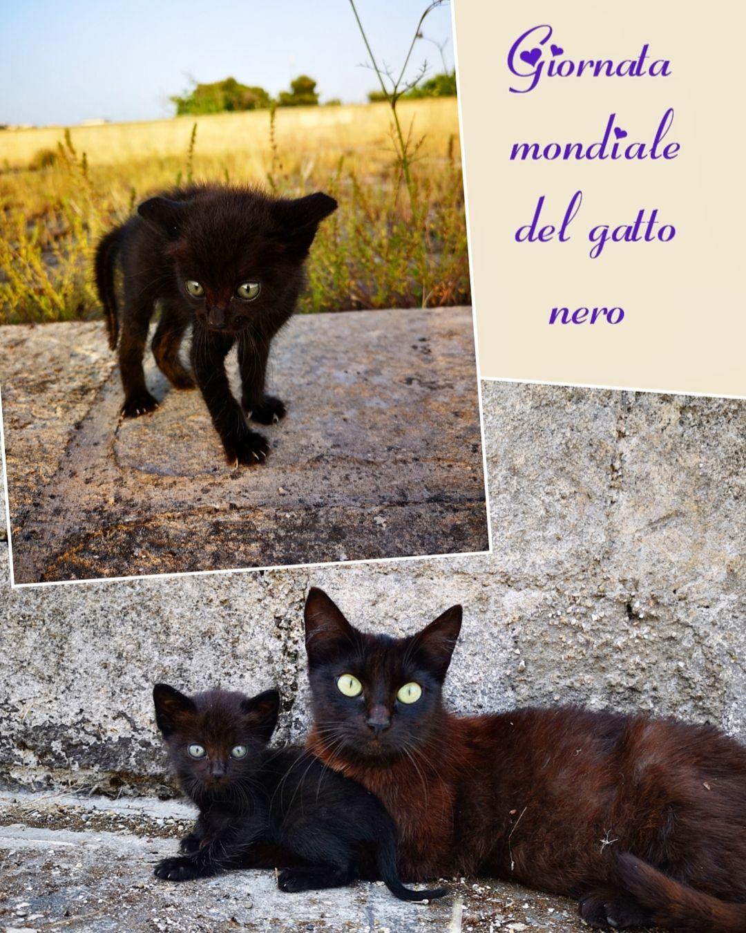 17 novembre Giornata mondiale del gatto nero miao