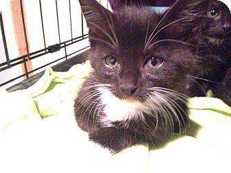 Ansonia Ct Domestic Mediumhair Meet Kittens A Kitten For Adoption Kitten Adoption